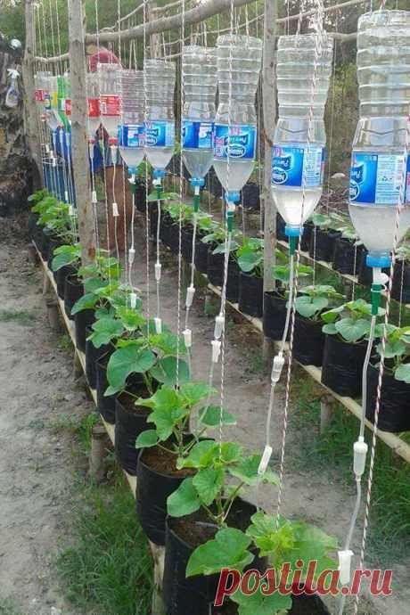 Общедоступная группа «МОЯ ДАЧА дизайн, огород, сад, цветы, идеи, советы, дачники и дачная жизнь» | Facebook