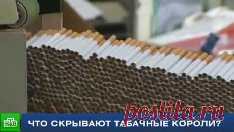 The reporter of NTV found out the truth about structure of cigarettes\/\/НТВ.Ru