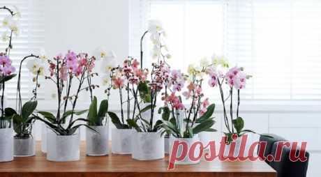 Как приблизить счастливый момент распускания одного из самых красивых цветов - орхидеи