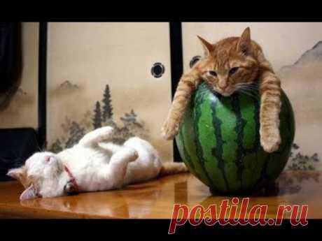 ПОПРОБУЙ НЕ ЗАСМЕЯТЬСЯ - Смешные Приколы с Животными до слез, смешные коты, funny cats #94 - YouTube