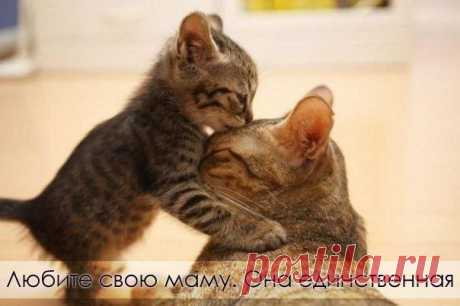 Любите маму