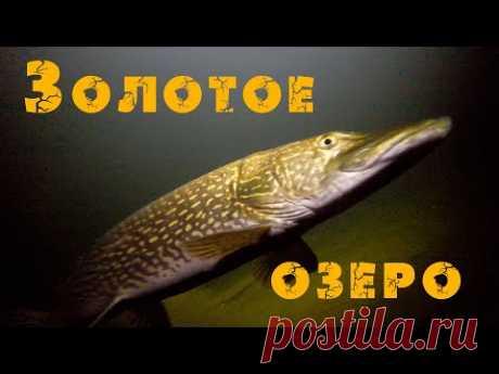 Золотое озеро Телецкое [Алтай] Altai. Golden lake Teletskoye. Сибирь (Дикая природа Алтая). Siberia