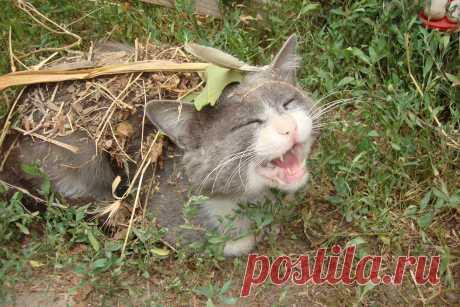 """Кот под """"шубой"""""""