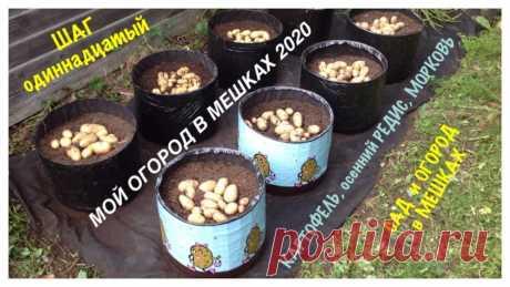 МОЙ ОГОРОД В МЕШКАХ 2020. ШАГ N11. Выращивание в МЕШКАХ (каркасных КАШПО) картофеля и моркови.