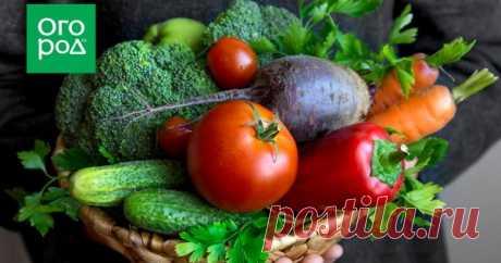 Шпаргалка огородника: как защитить овощи от болезней Болезни овощей – большая проблема, с которой сталкивается каждый огородник. Решать ее можно по-разному. При помощи народных средств – но они не всегда эффективны. Используя химические пестициды – но это уже не органическое земледелие. Где же золотая середина?