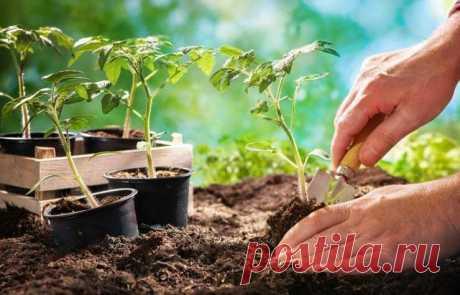 В какие дни по Лунному календарю нужно сеять семена и сажать рассаду в 2021 году | 6 соток