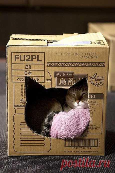 Домик для кошки своими руками / Для питомцев / Модный сайт о стильной переделке одежды и интерьера