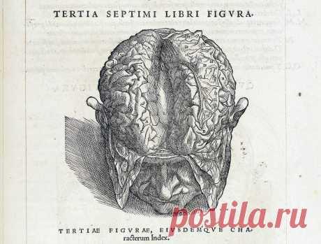 Везалий опубликовал один из основополагающих трудов медицины,  «О строении человеческого тела» в возрасте 28 лет, потратив много сил на то, чтобы книга была как можно более совершенной. Её иллюстрации обладают высокими художественными достоинствами и, как считают современные искусствоведы, они были созданы в мастерской Тициана (во всяком случае, первых двух из семи томов). В отличие от современных анатомических а́тласов, тела́ в книге не лежат безжизненно.