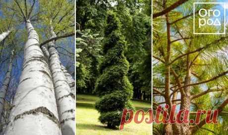 Какие растения подобрать для маленького участка (6 соток и меньше) | Идеи дизайна (Огород.ru)