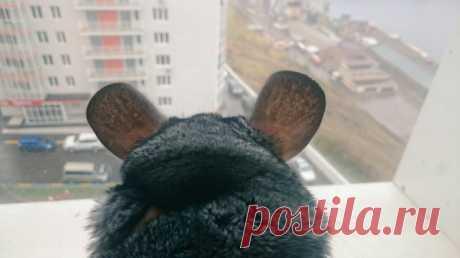 Домашние животные, кроме кошек и собак, которых держат в квартирах красноярцы | НГС24 - новости Красноярска