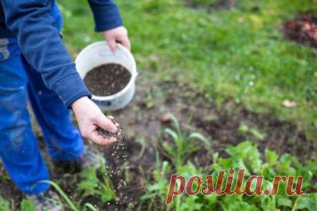Как поддержать здоровье почвы – секреты биоорганики — Ботаничка.ru