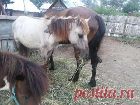 Занятия с молодой лошадью | Интересно о лошадях | Яндекс Дзен