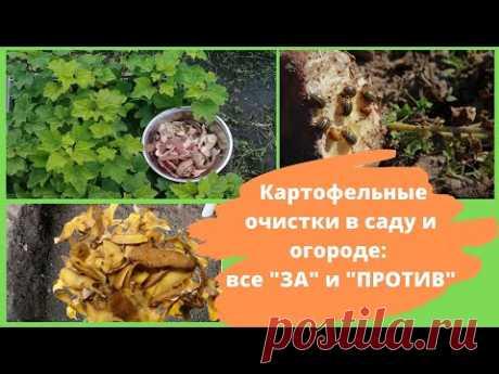 Картофельные очистки как удобрение для сада и огорода: как использовать. Все ЗА и ПРОТИВ