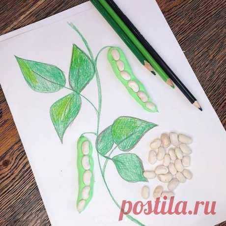 Объединение рисунка и аппликации с использованием семян