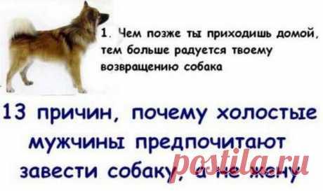Почему холостяки предпочитают завести собаку а не жену - Фото - Калейдоскоп Эмоций