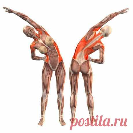 The best exercises for a lumbar muscle (the Soul muscle)