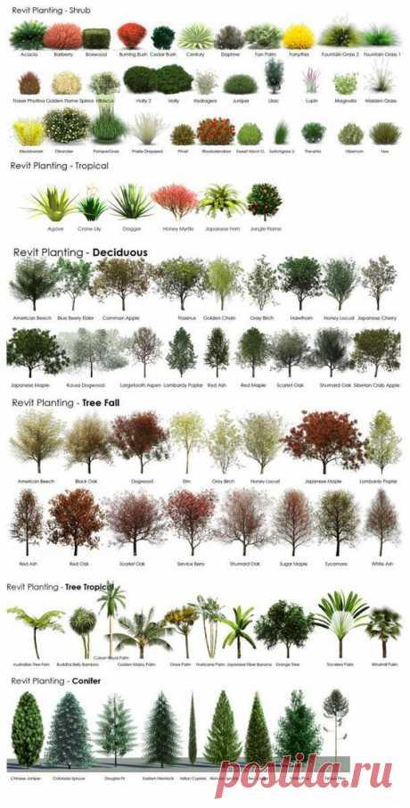 AMAZING RESOURCE ! In choosing plants for landscaping !  |  Pinterest • Всемирный каталог идей