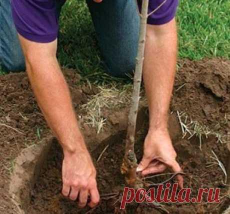 15 наиболее частых ошибок при посадке растений