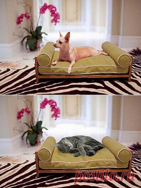 Побалуйте своих зверушек! Эксклюзивная мебель для кошек и собак..