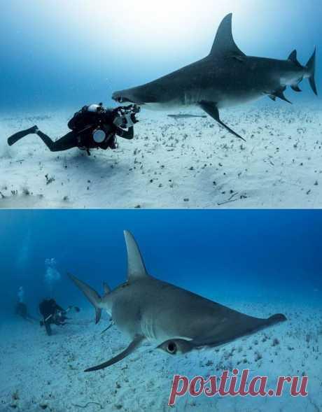 (+1) тема - Один на один с акулой | ЛЮБИМЫЕ ФОТО