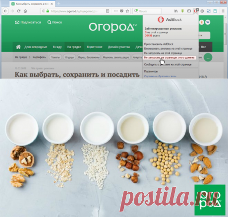 Кокосовое, миндальное, овсяное: вся правда о растительном молоке | Полезно (Огород.ru)