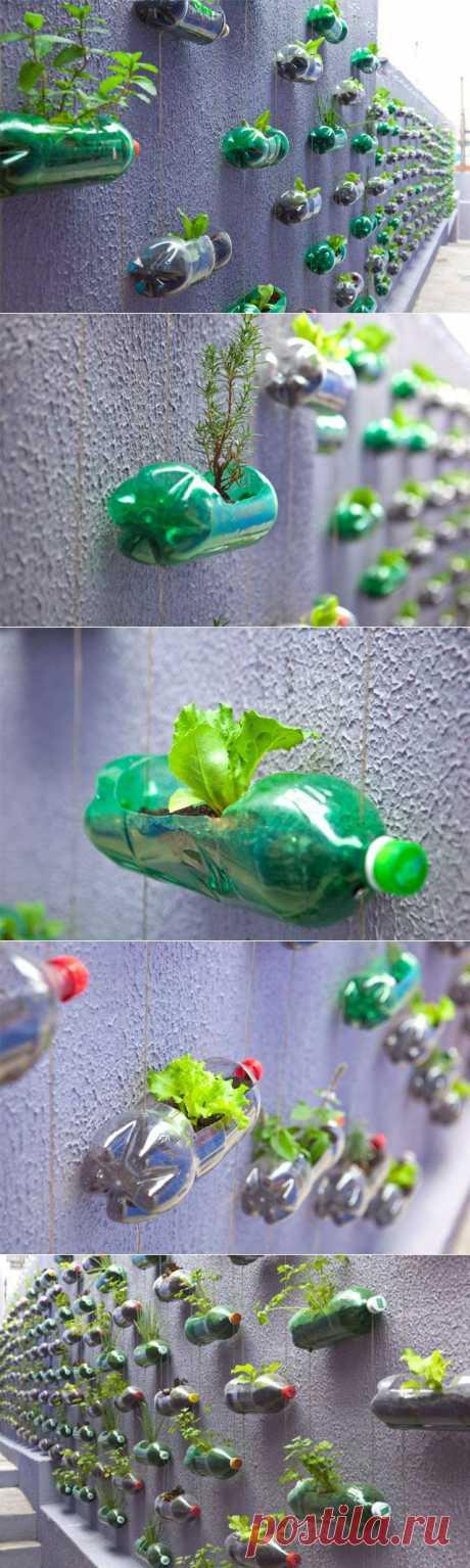 Сад из пластиковых бутылок / Я - суперпупер