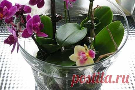Вода для полива комнатных растений