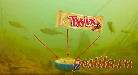 Реакция мирной рыбы на шоколадное печенье TWIX