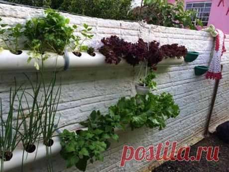 Вертикальное озеленение: 20 фото и схемы