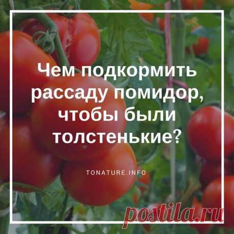 Чем подкормить рассаду помидор, чтобы были толстенькие? | toNature.info