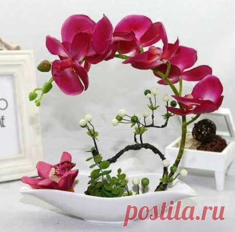 Как правильно поливать комнатную орхидею   Helperia.ru   Яндекс Дзен