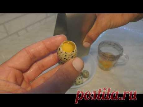 Как сделать станок для вскрытия перепелиных яиц