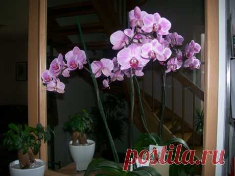 6 способов для начала цветения орхидей