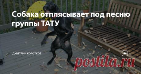 Собака отплясывает под песню группы ТАТУ