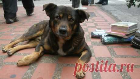 Куда обращаться, если вы заметили бездомных собак в Подмосковье-Инструкции и советы - Москва и Подмосковье-РИАМО