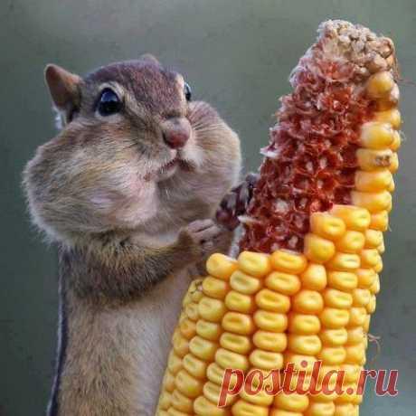 ¿El maíz? No, no veía)