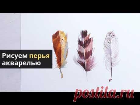 Как нарисовать перья птиц акварелью — kalachevaschool.ru — Подробный урок с Вероникой Калачевой