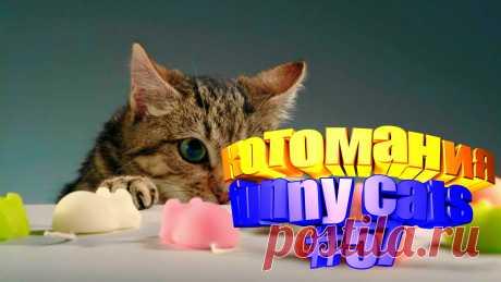 видео коты смешные, коты видео смешное, кот смешной видео, видео коты, видео кот том, приколы коты видео, видео котов, коты видео приколы, говорящие коты видео, животные смешные видео, животное смешное, животные видео смешное, про смешных животных, видео коте, коте видео, приколы для котов, приколы о кошках, коты прикол, смешное видео кошки, про кошек смешное, видео кошек смешное, видео смешных кошек, кошки смешное, кошка смешно, смешное о кошках, смешные кошки и, видео кошек, кошка видео
