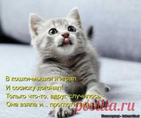 Свежая котоматрица для всех (36 фото) Еженедельная порция позитива и котиков для всех наших читателей!Всем приятных выходных и отличного настроения!