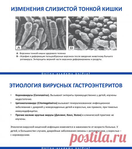(11) Острые кишечные инфекции. Микрофлора. Показатели, клиника, диагностика, лечение