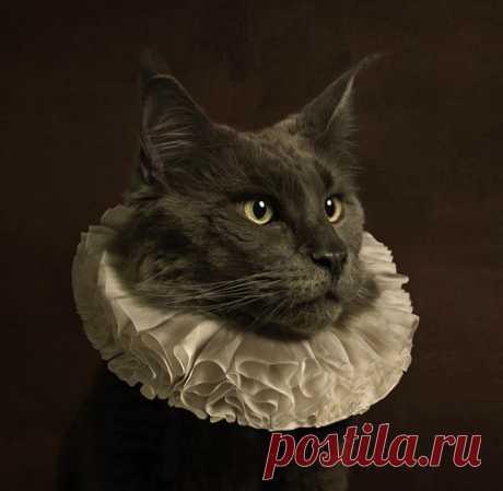 Мари Сесиль Тийс | Кот с белым ошейником IV (2013)