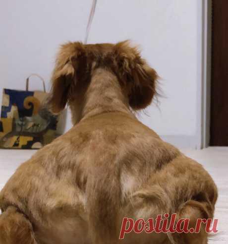 В интернете набрало популярность фото мускулистой собаки | Журнал Esquire.ru