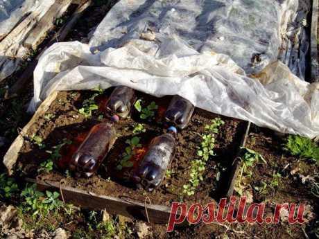 Как согреть растения | ОГОРОД БЕЗ ХЛОПОТ