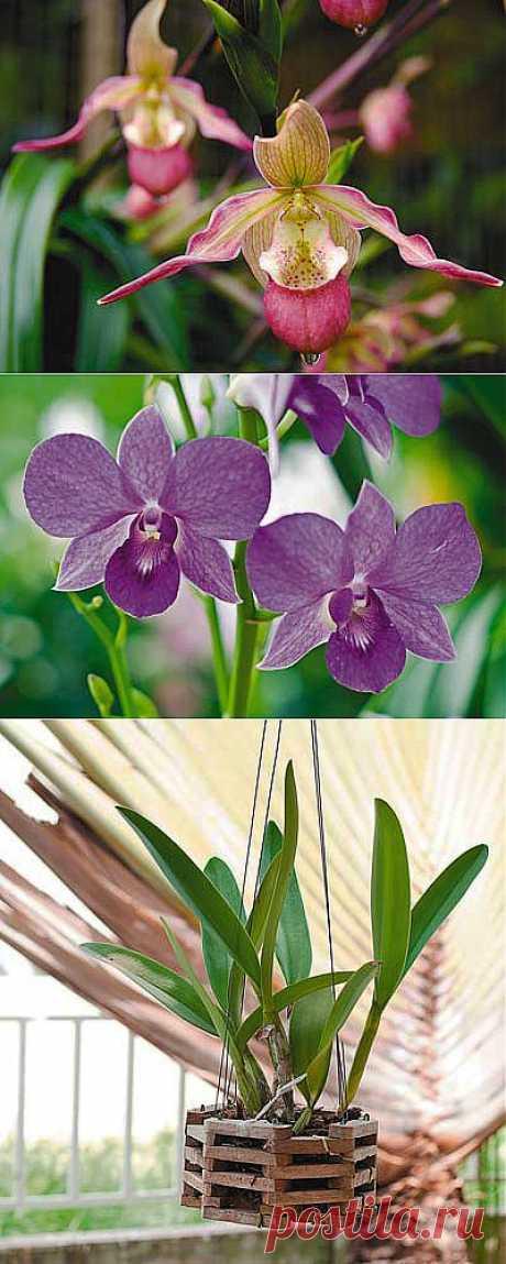 Орхидеи для начинающих: 8 простых советов | Наша дача