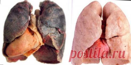 Чтобы очистить легкие от последствий курения, воспользуйтесь этим средством!