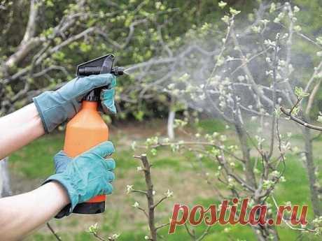 Как использовать железный купорос в садоводстве  Железный купорос – доступное и дешевое средство для повышения плодоношения и борьбы с вредителями. В качестве фунгицида используйте его для обработки садовых деревьев, кустарников и декоративных растений от поражений паршой, плодовой гнилью, листовой пятнистостью земляники и малины, антракнозом смородины, ржавчиной. Применение купороса благотворно влияет на растения, кора деревьев становится гладкой, листья приобретают насыщ...