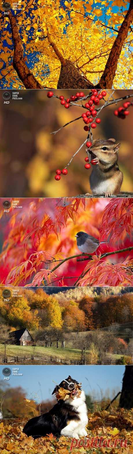 (+1) тема - Осеннее настроение | Непутевые заметки