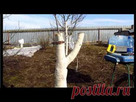 щеплення персика на сливі - YouTube