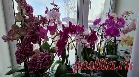 Как правильно ухаживать за орхидеями зимой, чтобы они долго и пышно цвели. Ошибка, которая губит орхидеи   MyFlowersDream   Яндекс Дзен