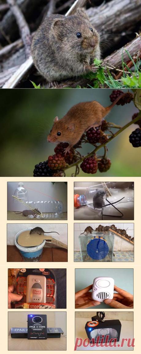 Как на даче избавиться от мышей простыми способами